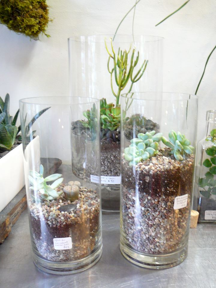 May 26th Cactus Succulent Terrarium Class The Palm Room