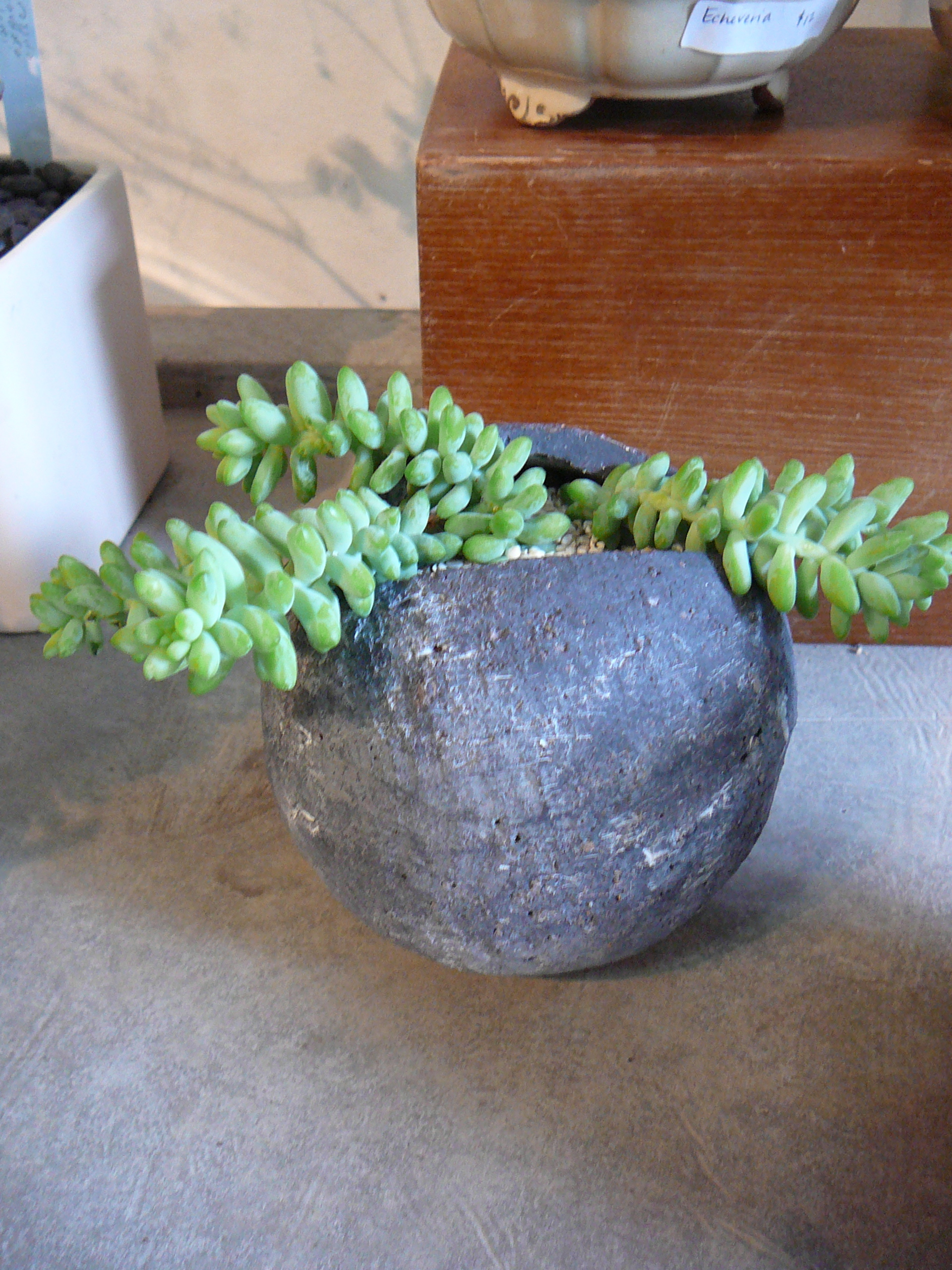 Water Living Plants